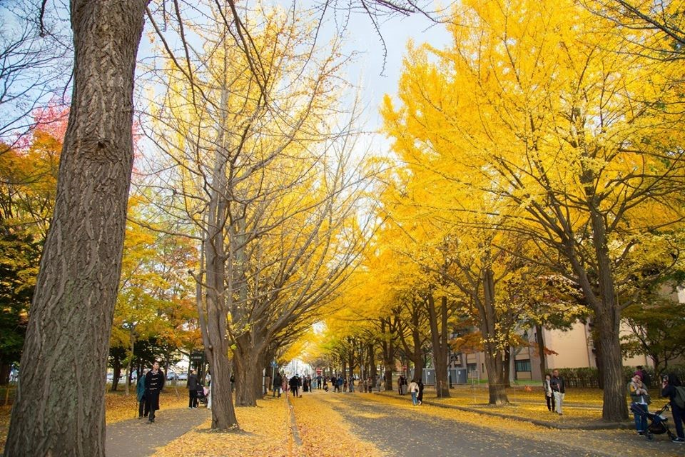 Discovering the charm of Hokkaido in Nov (Day 1)